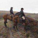 UK Cattle Herding Farm Dartmoor Photo15