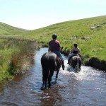 UK Cattle Herding Farm Dartmoor Photo6