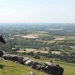 UK Cattle Herding Farm Dartmoor Photo7