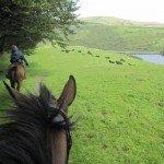 UK Cattle Herding Farm DartmoorPhoto16