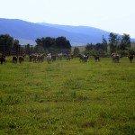 USA Montana Rocking Z Photo4