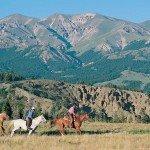 USA Wyoming Bitterroot Photo2