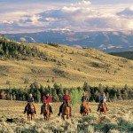 USA Wyoming Bitterroot Photo6