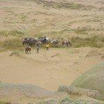 Uruguay Atlantic Coast Ride Photo22