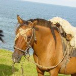 Uruguay Atlantic Coast Ride Photo8