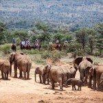 Kenya Riding Safari Blog Image4