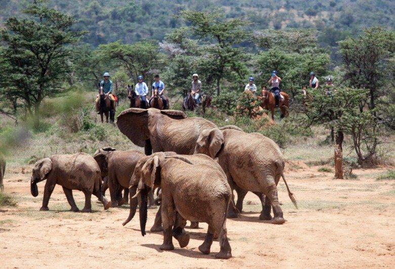 Kenya Riding Safari by Siobhan English