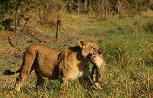 Michael and Louise on RAW Botswana Safari7