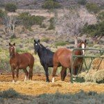 Mustangs Feeding Time - Mustang Monument Horse Riding Holidays