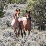 Mustangs - Mustang Monument Horse Riding Holidays