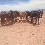 Atacama Desert Chile Adventure Ride - Nov 2015 Img10