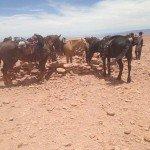 Atacama Desert Chile Adventure Ride - Nov 2015 Img10
