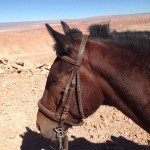 Atacama Desert Chile Adventure Ride - Nov 2015 Img21