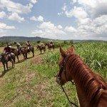 Plantations - Nile Horseback Safaris Uganda
