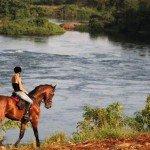 Lone horse - Nile Horseback Safaris Uganda