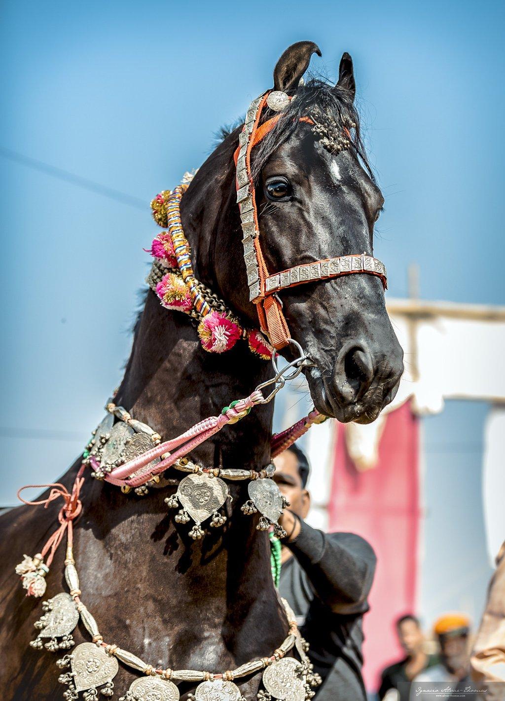 Palace To Palace Rides Rajasthan